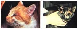 Туберкулез у кошек, ответы врачей, консультация
