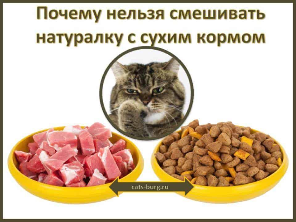 Почему кошкам нельзя давать свинину. свинина в рационе кошки и собаки – вечная анафема? можно ли кошкам и собакам свинину? сухие, влажные корма и сырое мясо