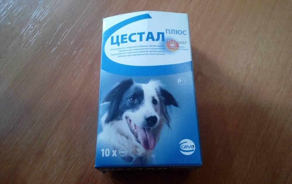 Цестал для кошек: безопасный и эффективный противоглистный препарат