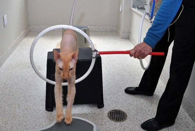 Как дрессировать щенка: в домашних условиях