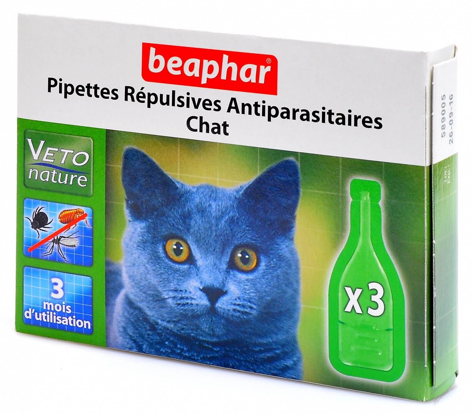 Защитить и не навредить! средства от блох для котят: шампуни, капли и другие