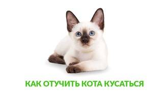 Как отучить кота кусаться, царапаться, кидаться?