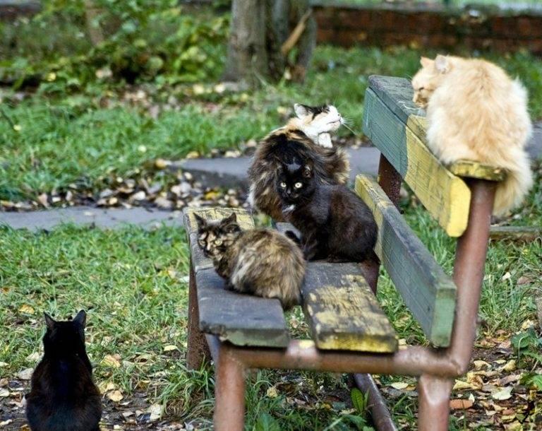 Как поймать кошку дикую или домашнюю на улице: способы и средства привлечения животного - animallist.ru