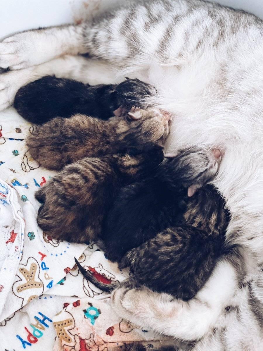 Кошка родила одного котенка и больше не рожает