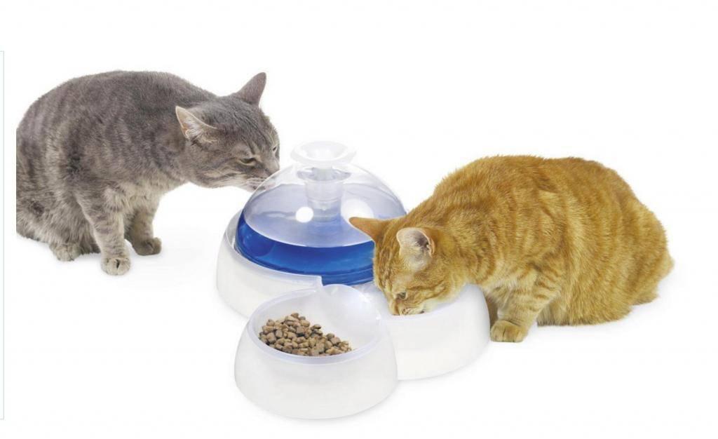 Кошка не пьет воду, что делать