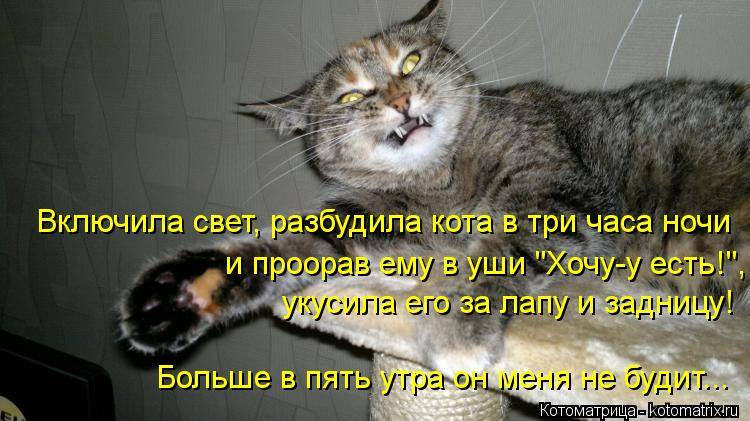 Коты мешают ночью спать: что делать, основные причины