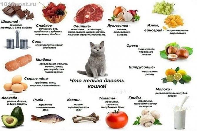 Котенок в 4 месяца развитие. готовые корма для котят. что нельзя давать котёнку в домашних условиях