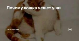 Почему у котенка трясется голова ⋆ онлайн-журнал для женщин