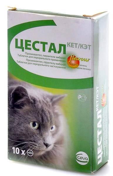 Обзор препаратов для кошек от глистов и наружных паразитов: капли на холку, таблетки и другие средства