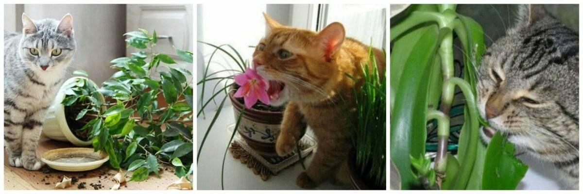 Трава для кошек - название и как вырастить дома, фото и видео
