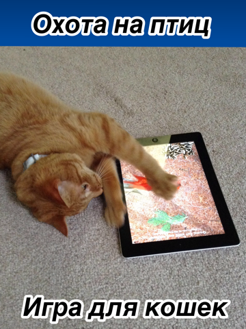 Игры и приложения для кошек на ipad