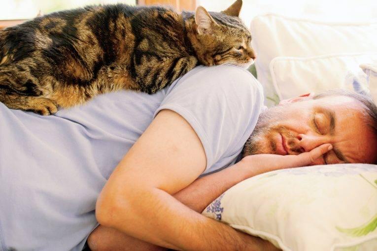 Лечат ли кошки и коты человека: различные точки зрения
