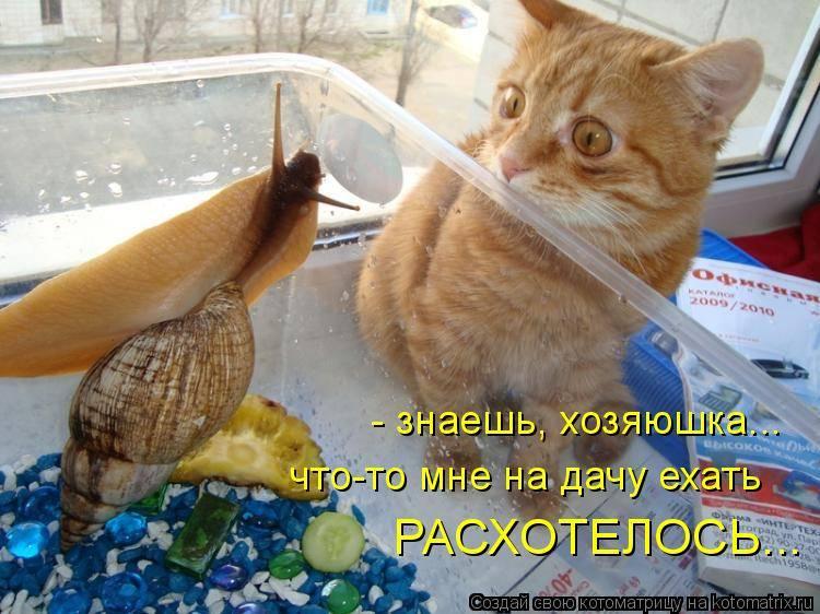 Почему кошкам нельзя рыбу: в каком количестве давать, вред и польза