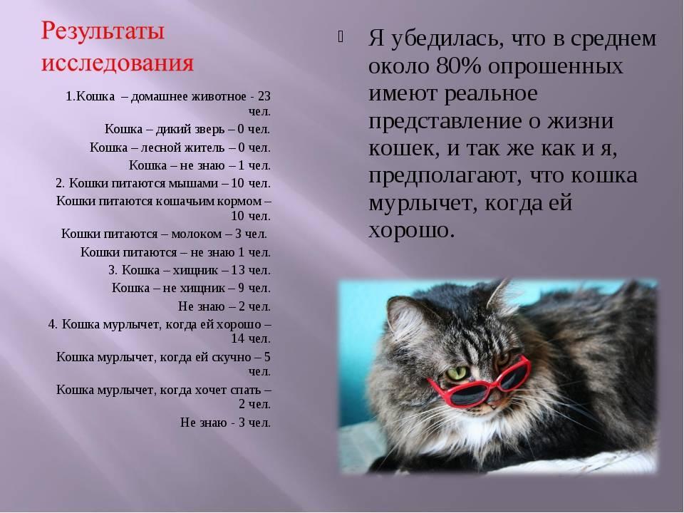 Чужая кошка пришла в дом: примета, к чему, по месяцам, зачем приходят, что делать, основные причины, можно оставить себе, как назвать незваного гостя на удачу, что означают цвета котов