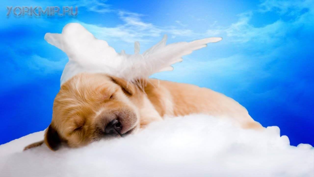 Как пережить смерть любимого животного