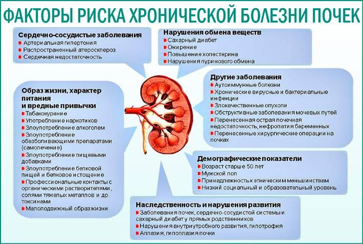 Пиелонефрит у кота: симптомы и лечение, особенности питания