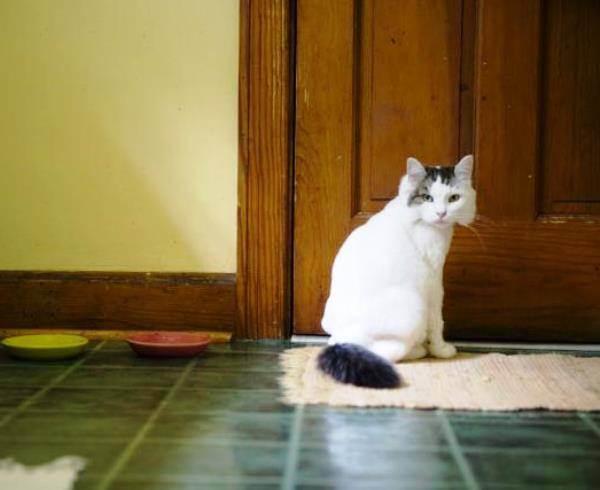 Что делать, если кот метит дома - когда коты начинают метить территорию и как от этого отучить - лапы и хвост