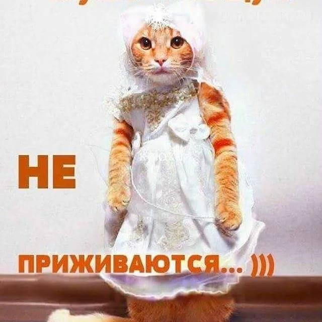 Почему не приживаются коты в доме?