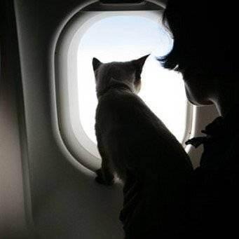 Путешествуем вместе с кошкой