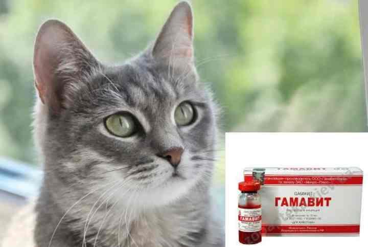 """Витамины """"гамавит"""" для кошек: инструкция, дозировка, цена и отзывы покупателей"""
