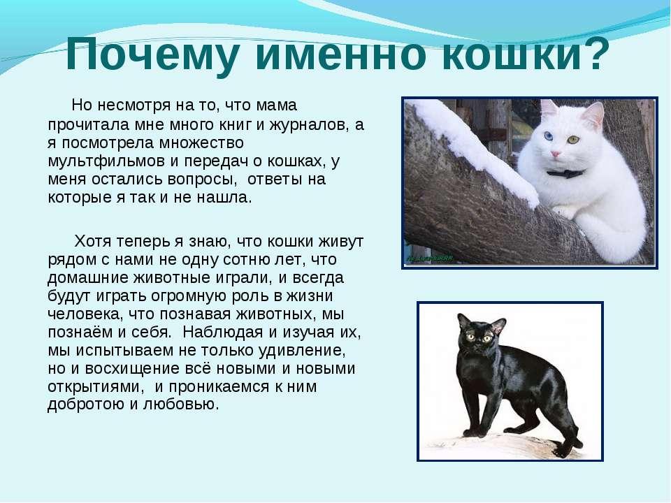 Домашние кошки — анатомия грации