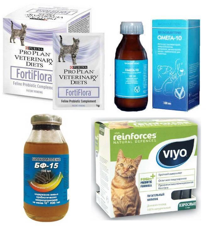 Как лечить расстройство кишечника у кошек
