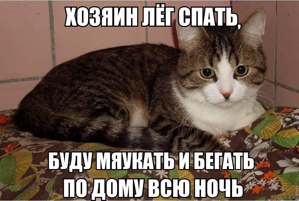 Варианты как можно заставить спать кошку по ночам если она не дает уснуть
