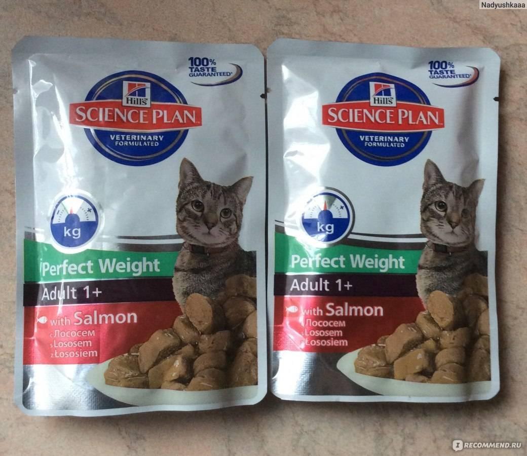 Чем кормить шотландских кошек советы ветеринаров (видео)