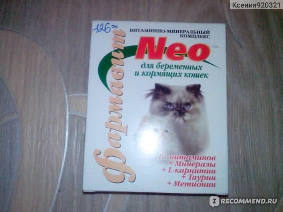Топ-7 витаминов для беременных и кормящих кошек