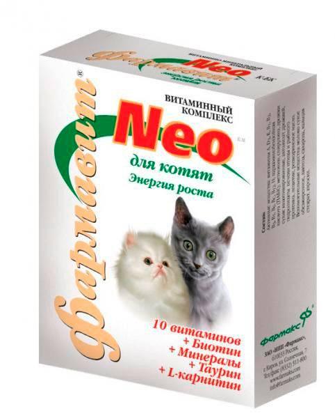 Витамины для котят – вкусные и полезные лакомства для их развития