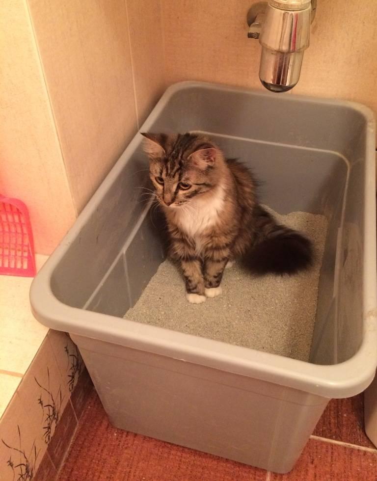 Всё, что нужно знать о кошачьем лотке - статьи