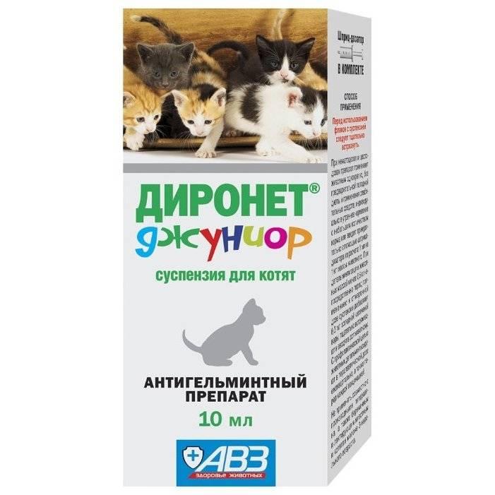 Глистогонные средства для кошек: выбор и применение глистогонные средства для кошек: выбор и применение
