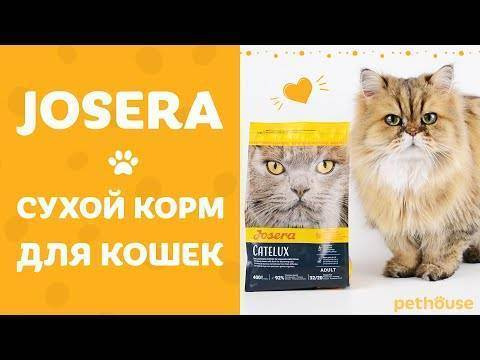 Orijen cat & kitten grain free - рейтинг, обзор корма, сравнение и анализ orijen cat & kitten grain free, состав и описание корма, плюсы и минусы orijen cat & kitten grain free, отзывы о корме, характеристика и дозировка