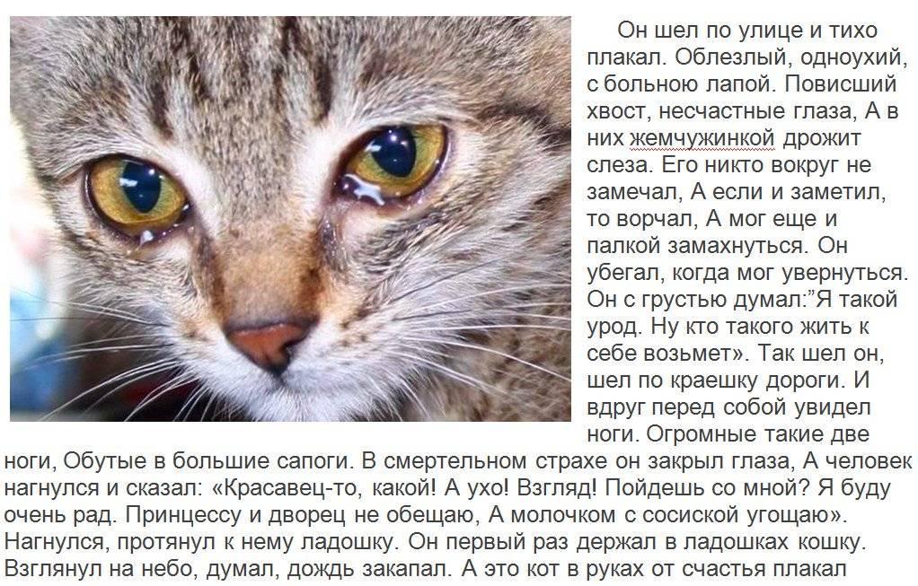Плачут ли коты? что нужно знать о плачущем питомце (часть 1)