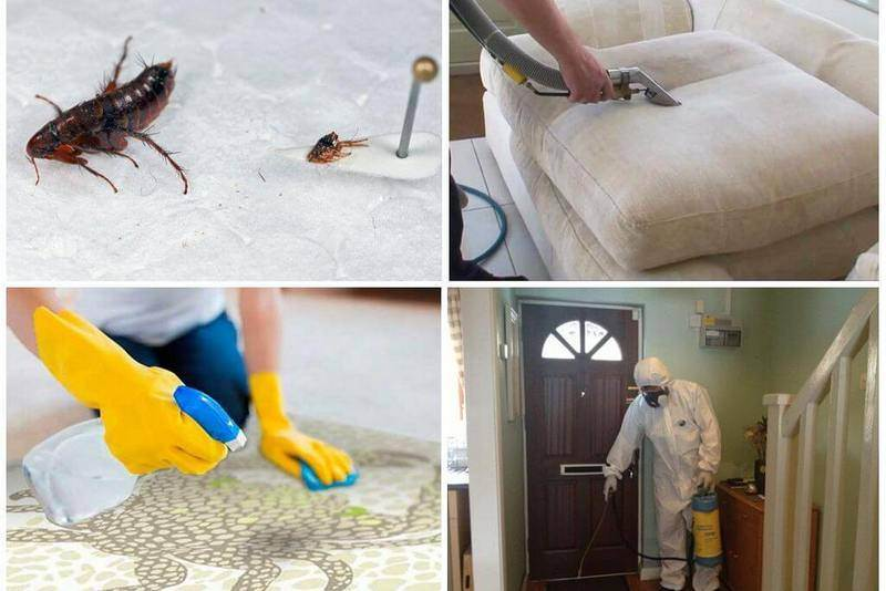 Блохи дома как избавиться в квартире самому