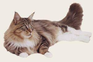 Психические потребности домашней кошки / ветеринарный врач
