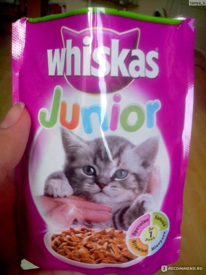 Корм вискас для котят: состав и отзывы ветеринаров, достоинства и недостатки, список витаминов и минералов