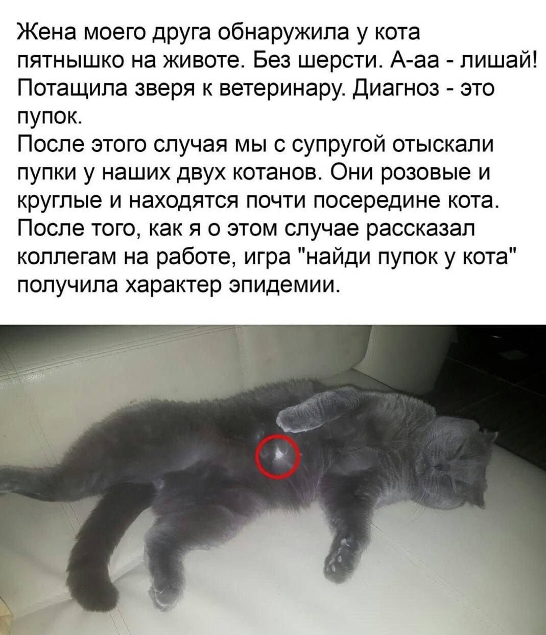 Есть ли у кошек пупок