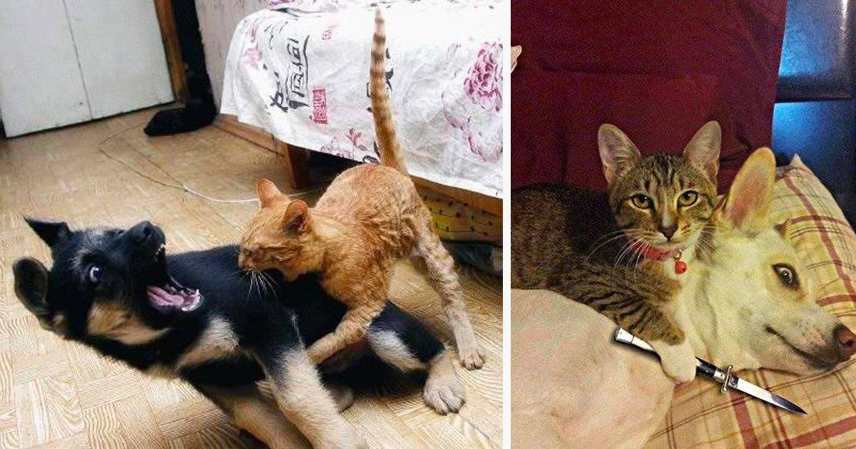 Агрессивный котенок: как помочь питомцу стать спокойным