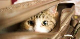 Как помочь кошке перенести дальнюю дорогу.