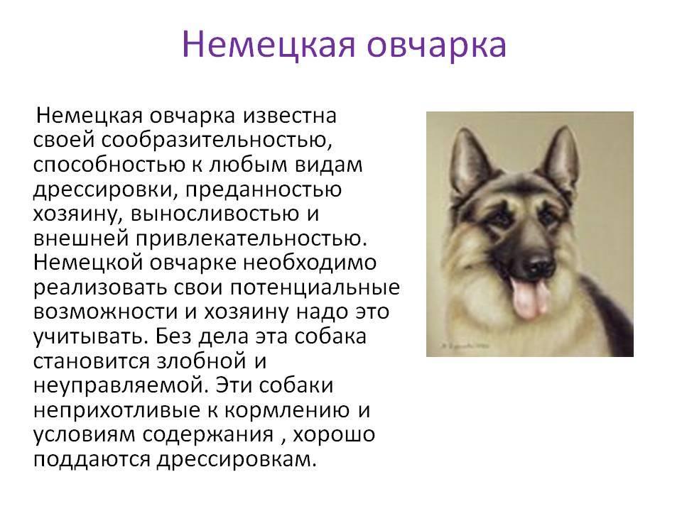 Щенки московской сторожевой собаки ? что нужно знать для воспитания и ухода?