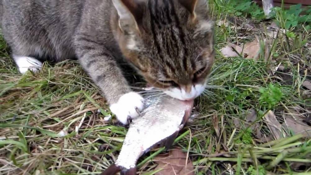 Почему котам нельзя рыбу?