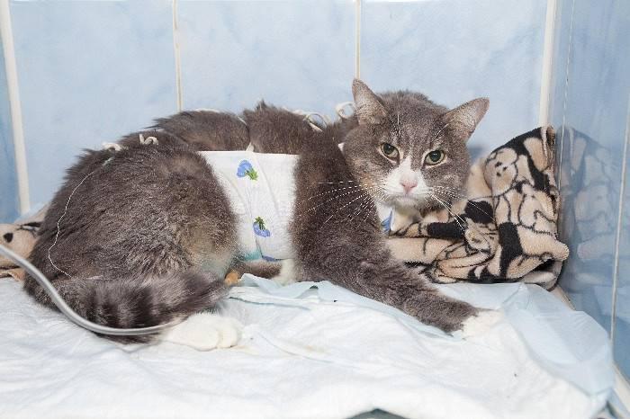 Как лечить рахит у котят | наши лучшие друзья