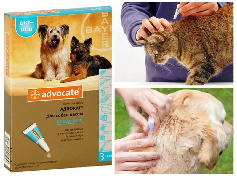 Ветеринарный препарат «адвокат» для кошек: дозировка, инструкция
