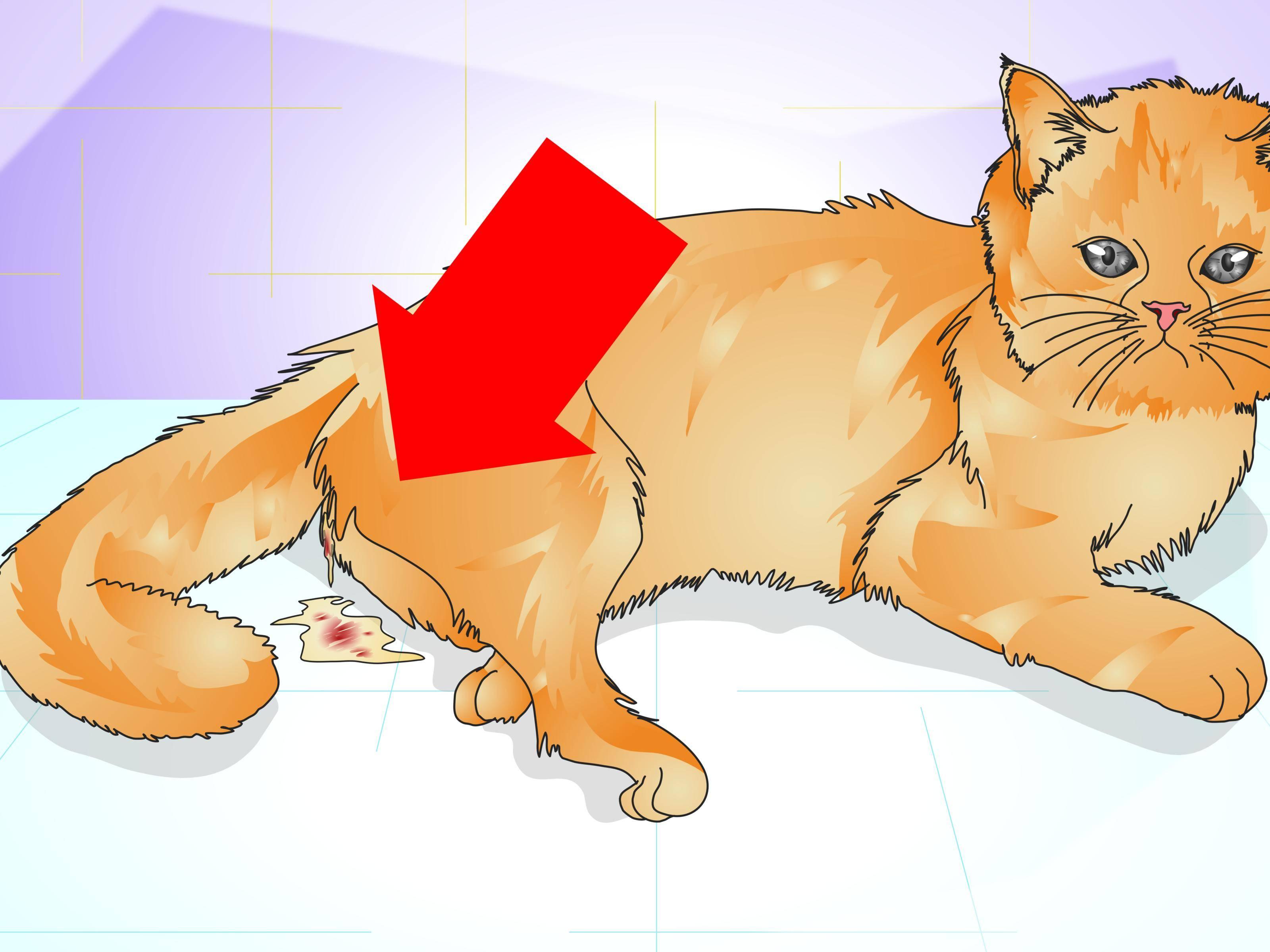 10 лучших средств от гуляния кошек