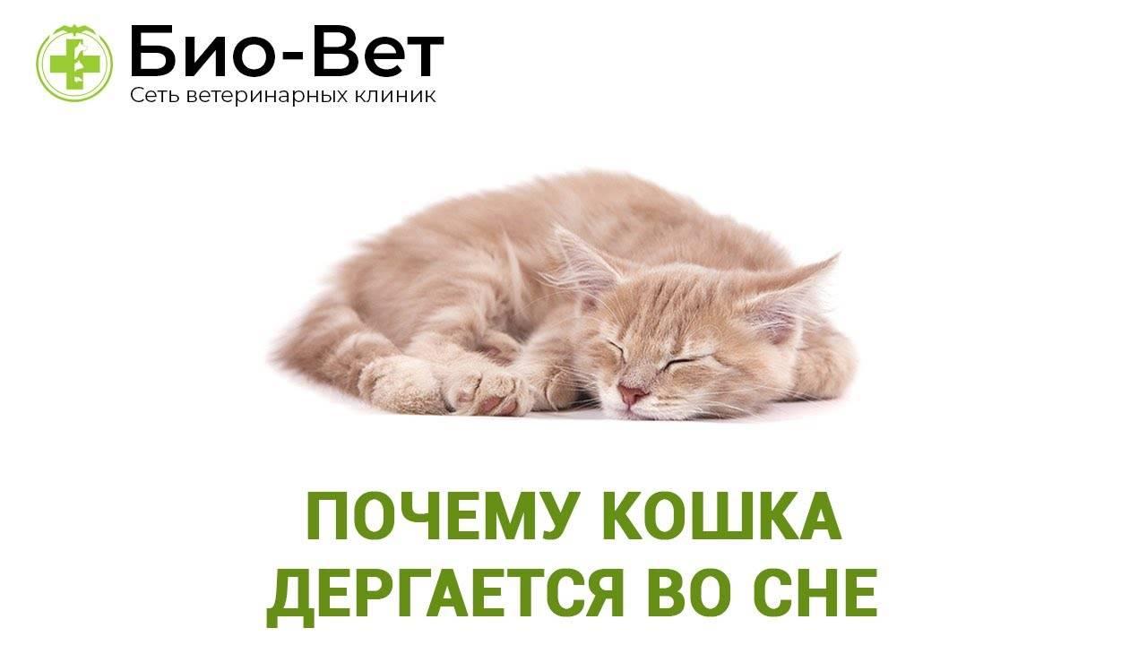 Кот дергается во сне: почему котенок или взрослая кошка, когда спит, дергает лапами, в чем причина?