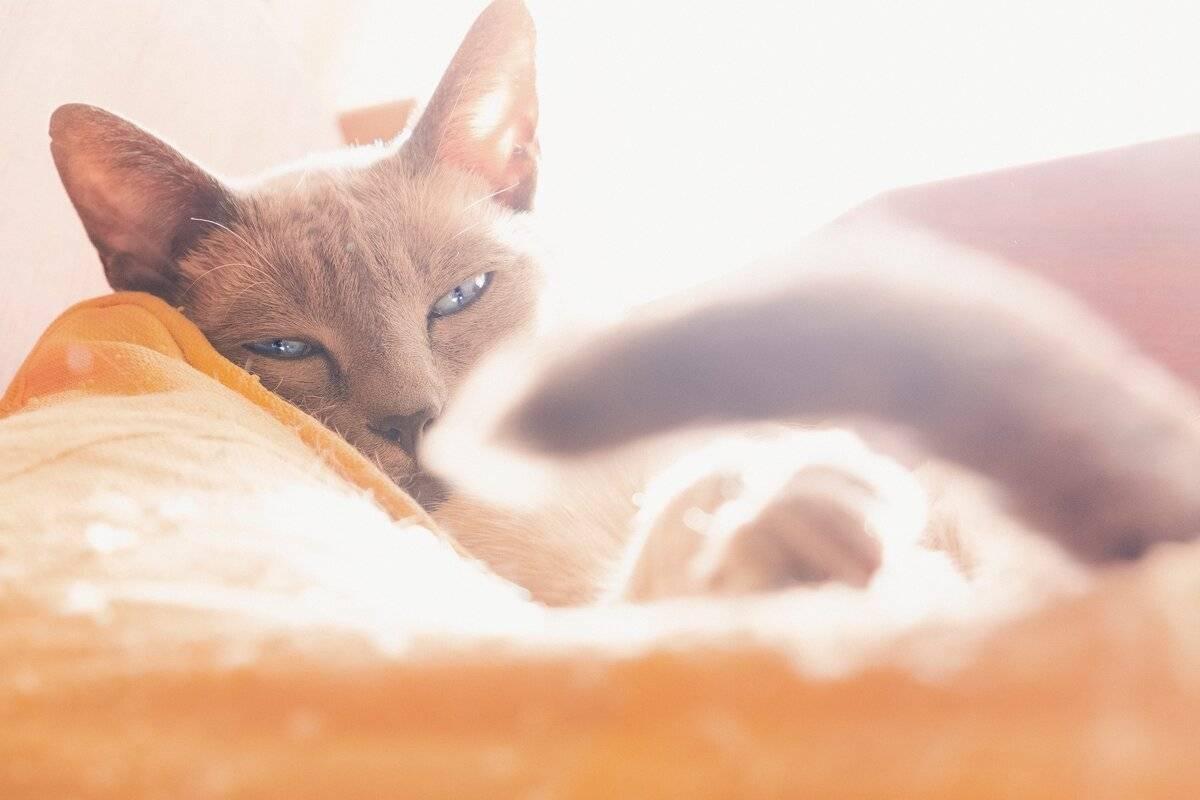 Признаки теплового удара у кошек и методы оказания неотложной помощи
