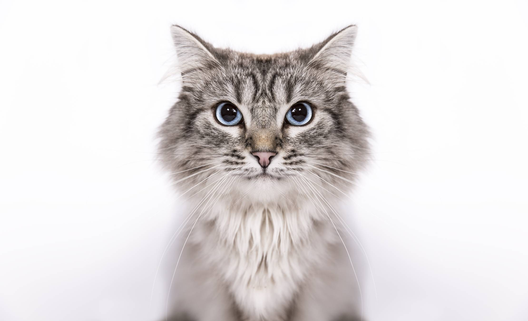 Как глистогонить кошку – препараты, советы, рекомендации