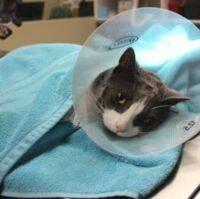 Как успокоить нервную кошку. часть 3