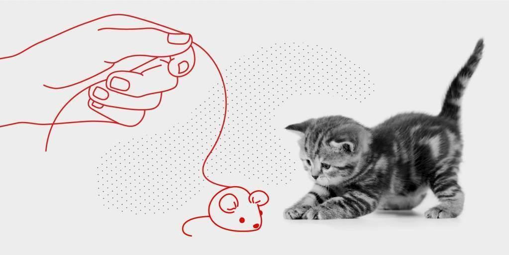 Адаптация котенка в новом доме: советы и рекомендации